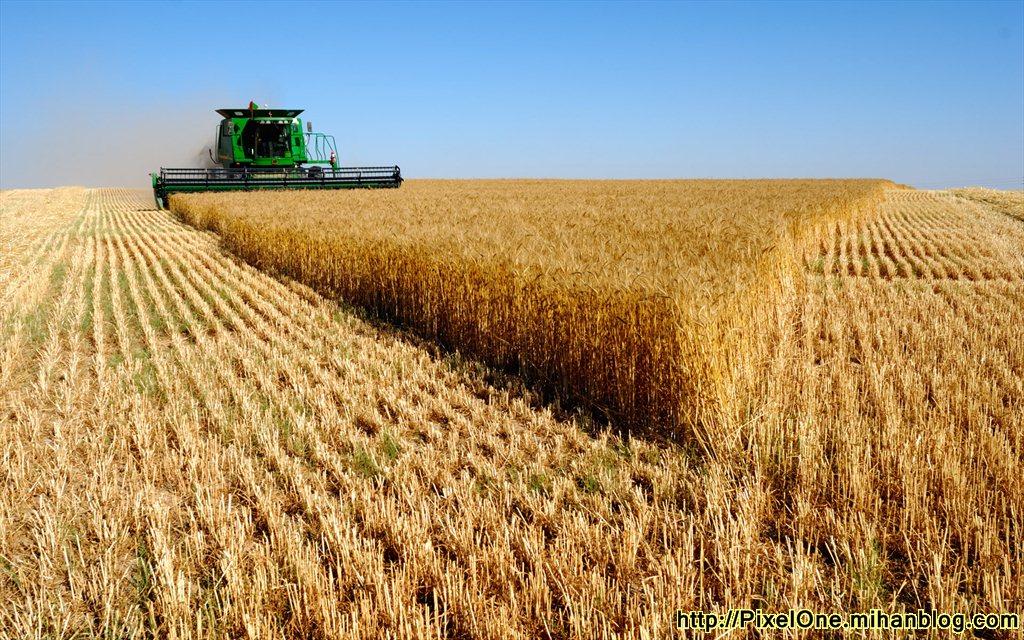 خرید بیش از ۴۵ هزار تن گندم در آذربایجان شرقی