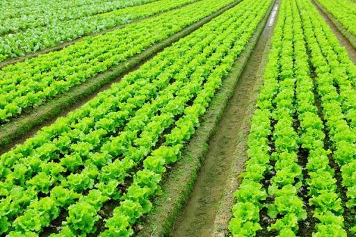 فراخوان جذب مشارکت وسرمایه گذاری درمرکز تحقیقات کشاورزی آذربایجان شرقی